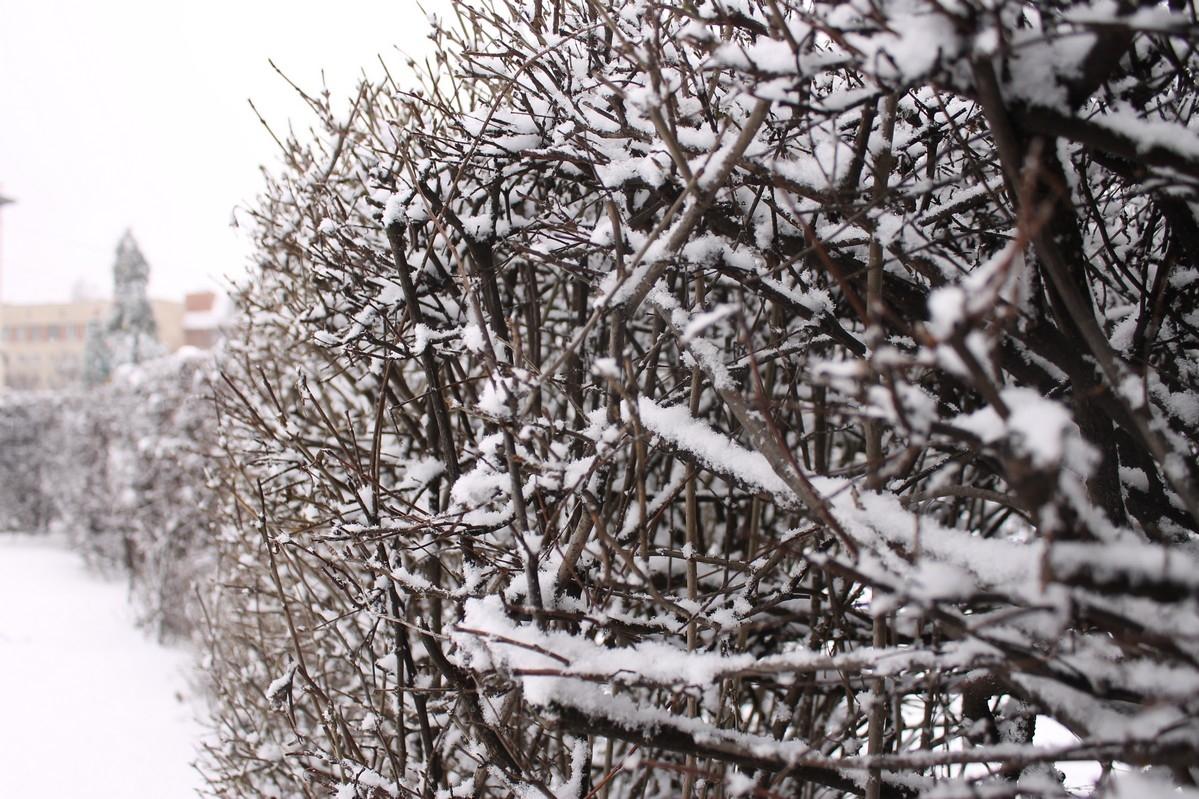 Сніговою ковдрою зима вкриває місто