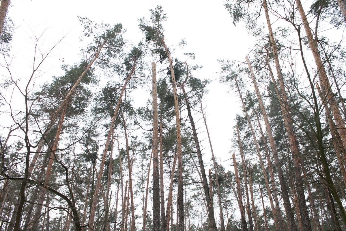 У якому стані черкаські ліси після негоди?