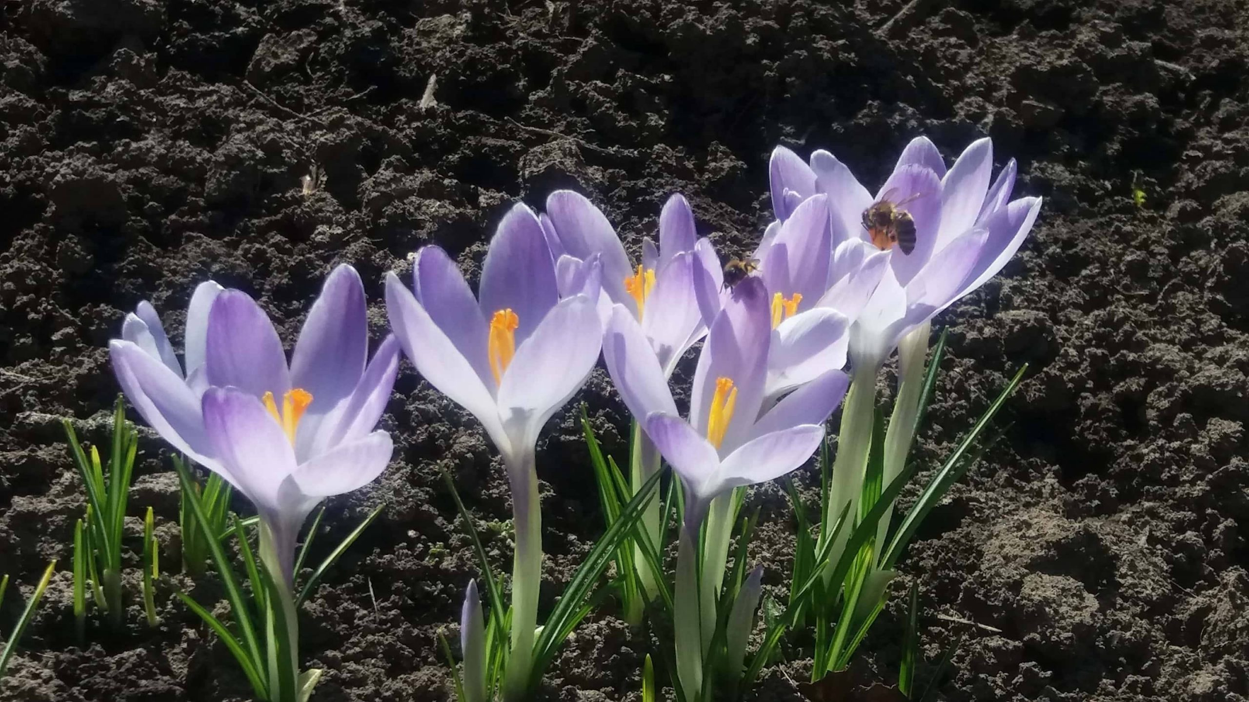 Черкащина весняна