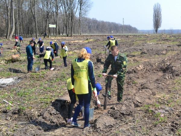У Лисянці посадили  9,3 тисячі дубів