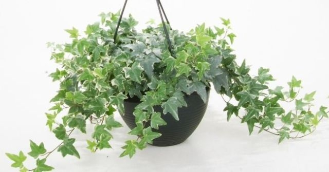 Прикмети, пов'язані з кімнатними рослинами