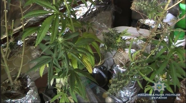 3 кг канабісу та 70 рослин коноплі вилучили в черкащан
