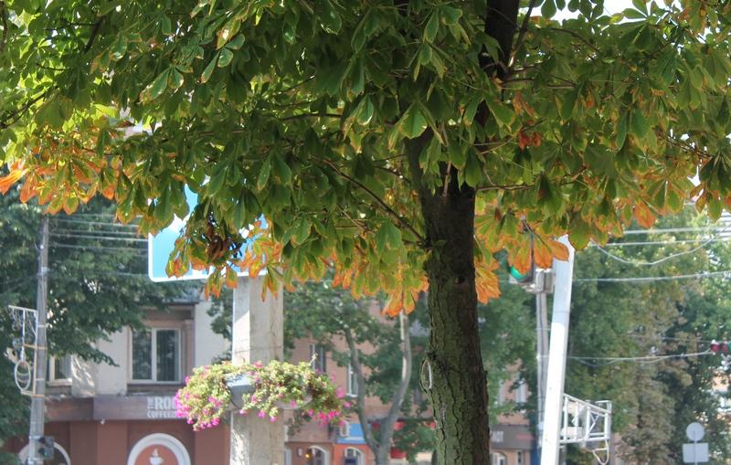 Ішов 10-й день осені в Черкасах…