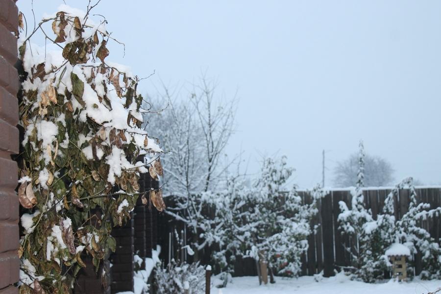 Перший сніг по-черкаськи