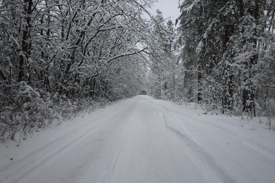 Казковий зимовий ліс