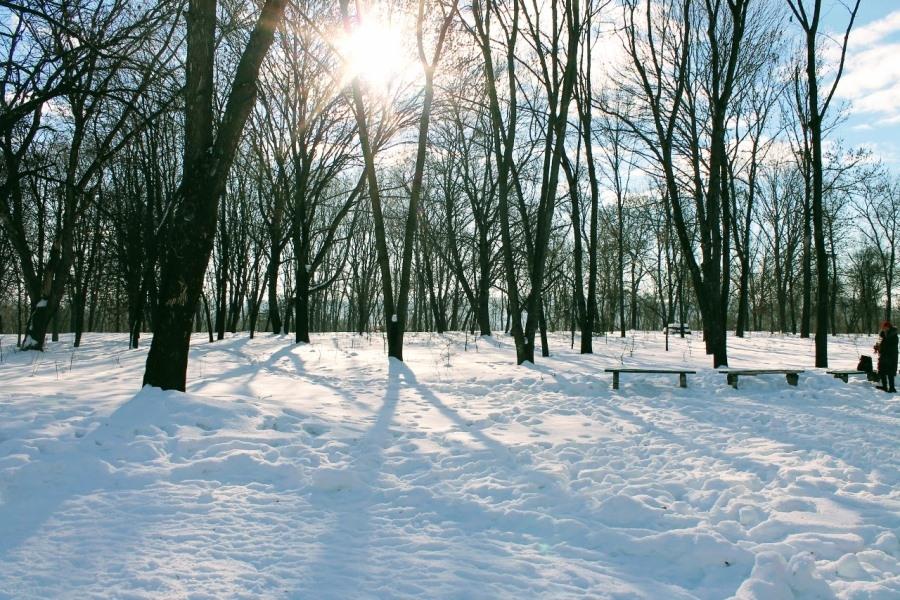 Сонячна зима в парку Декабристів