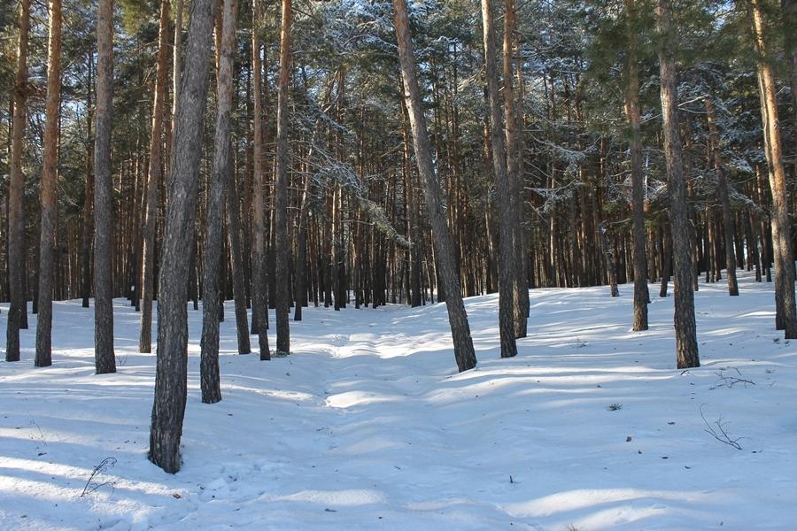 Вихідні за містом: Дніпро, дорога і засніжений ліс