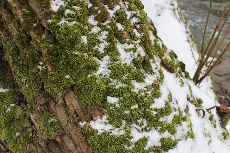Ліс «під мікроскопом»