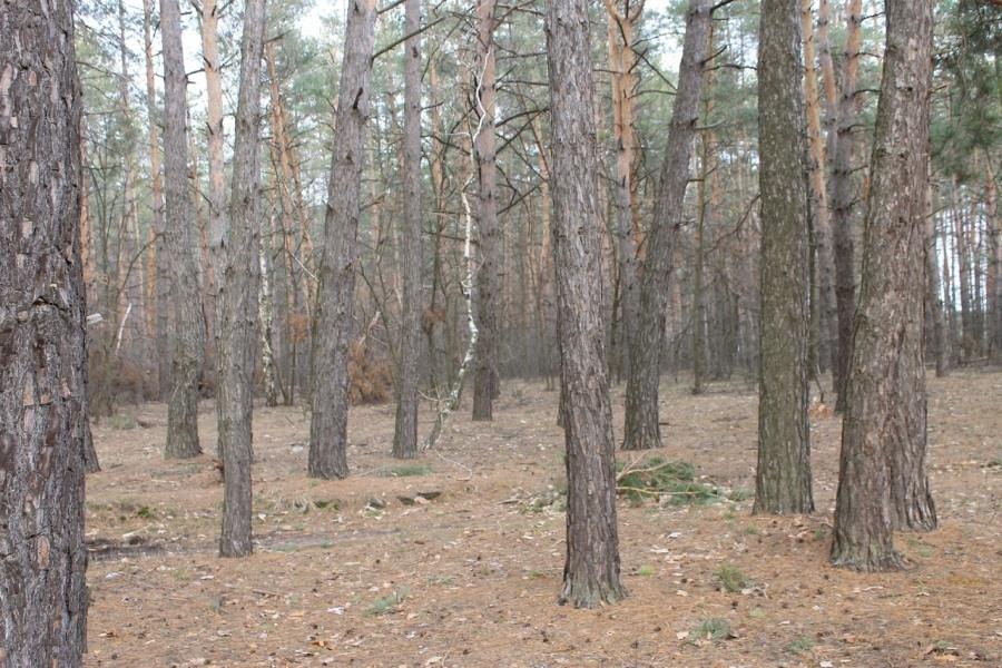 Магія сонця в черкаському лісі
