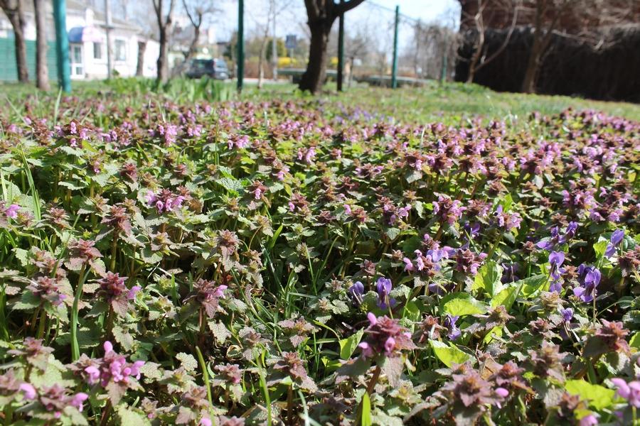 Весняні кольори на вулицях Черкас