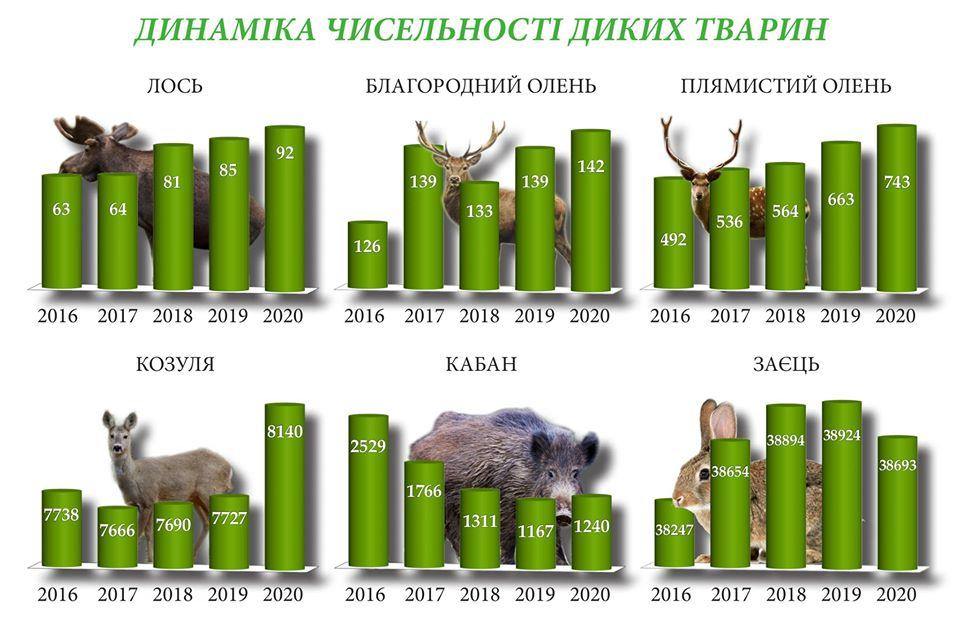 У лісах Черкащини порахували диких звірів