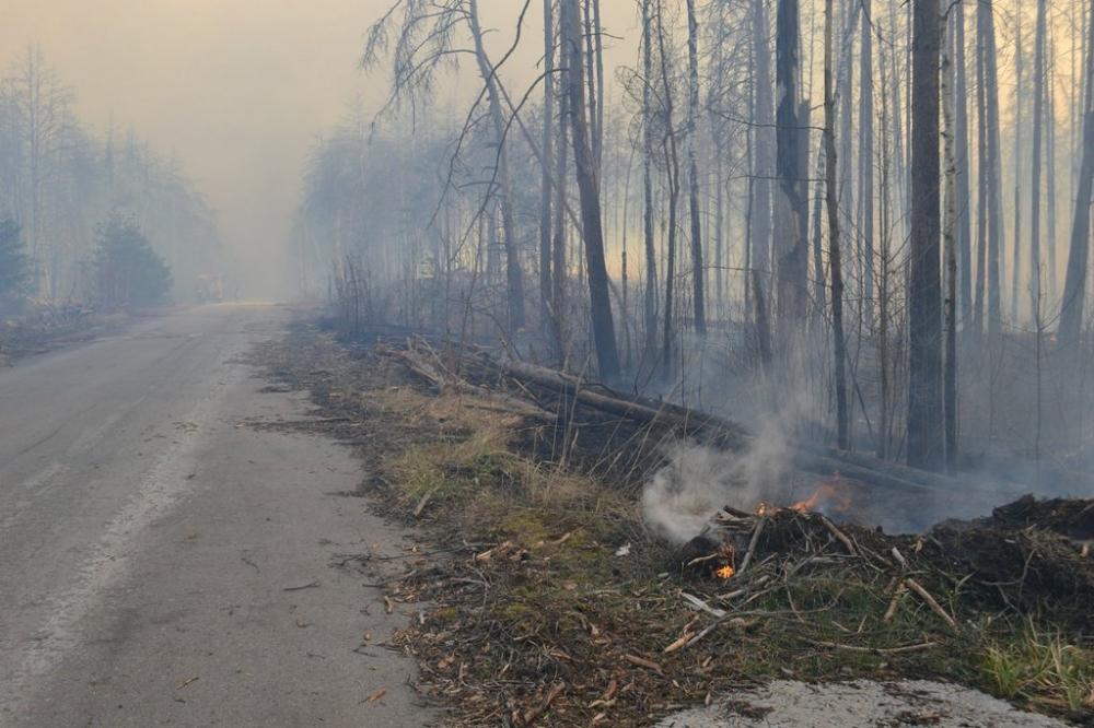 Пожежа в Чорнобильских лісах