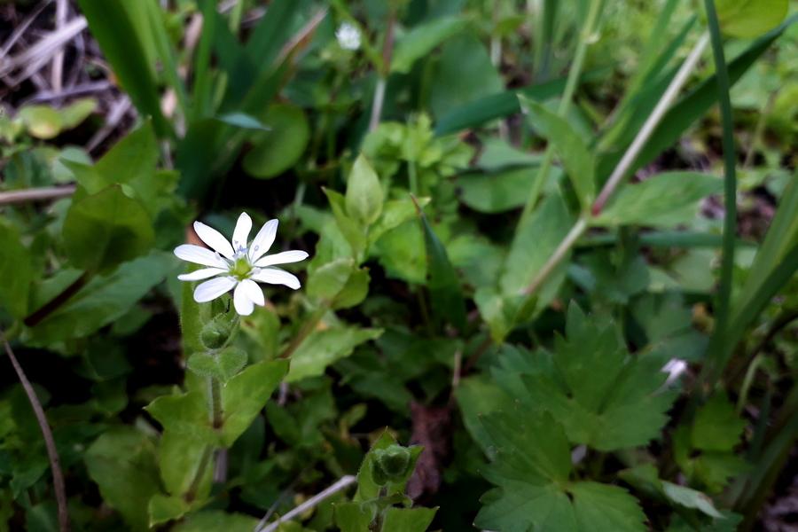 Квіти з весняного саду