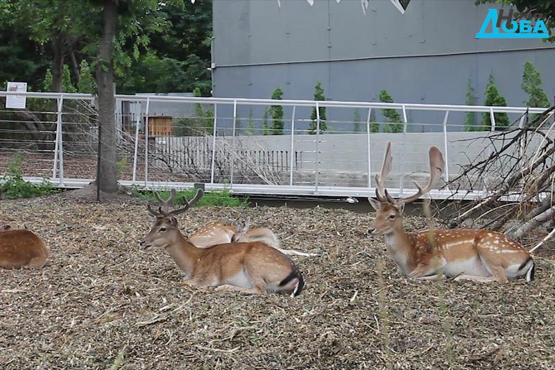 Черкаський зоопарк продовжує розвиватися і оновлюватися
