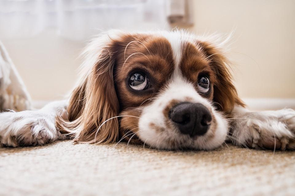 У Черкасах штрафуватимуть власників собак за вигул неналежним чином