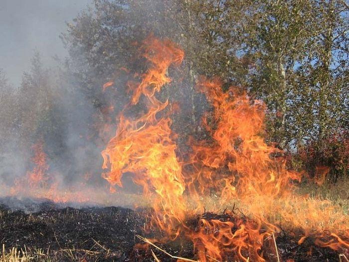 На Черкащині надзвичайна пожежна небезпека – розводити вогонь у лісі заборонено