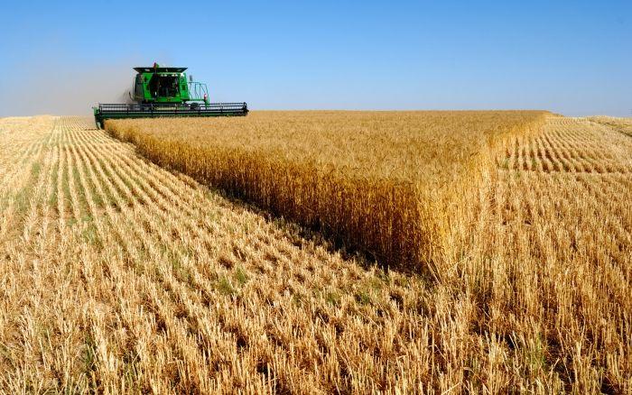 Аграрії області завершують збір зернових та зернобобових