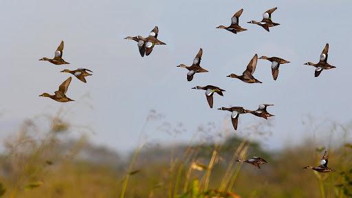 На Черкащині стартує сезон полювання на пернату дичину