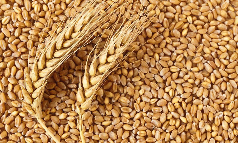 Черкаські аграрії намолотили перший мільйон тонн зерна