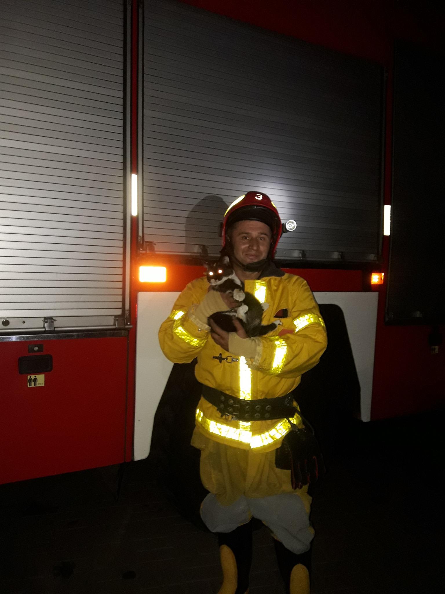 Черкаські рятувальники дістали кота з дерева