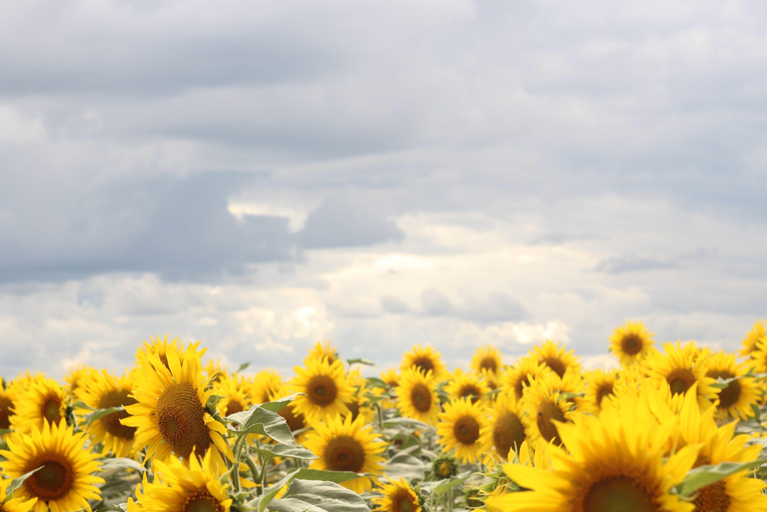На Черкащині очікується нестабільна погода
