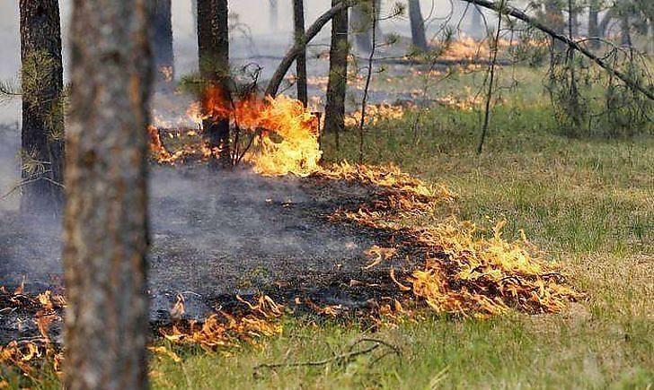 Верховна Рада у 18 разів збільшила штрафи за спалювання сухої трави