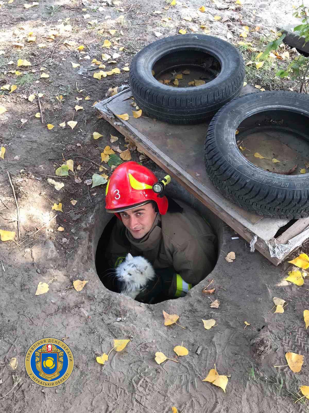 У Черкасах рятувальники визволили котика з каналізаційного колодязя