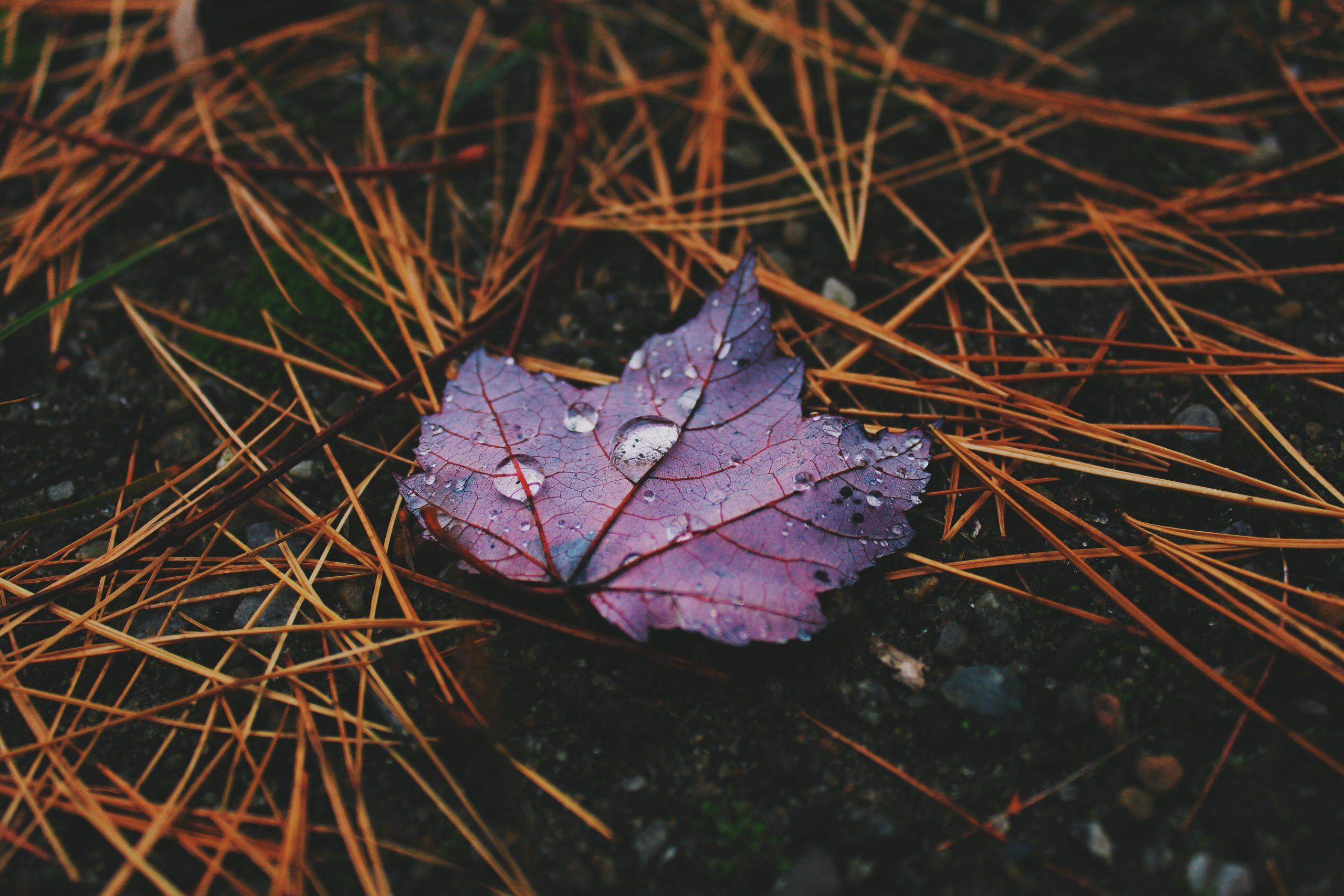 Завтра Черкащину очікують короткочасні дощі, місцями з грозами