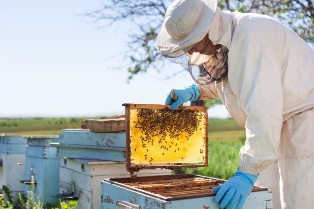 В області бджолярам виплатять майже 12 млн грн дотацій