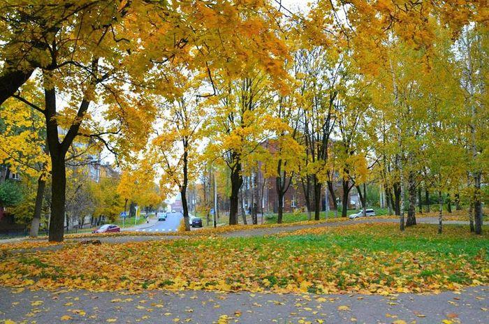 На Черкащині прогнозують хмарну й без опадів погоду