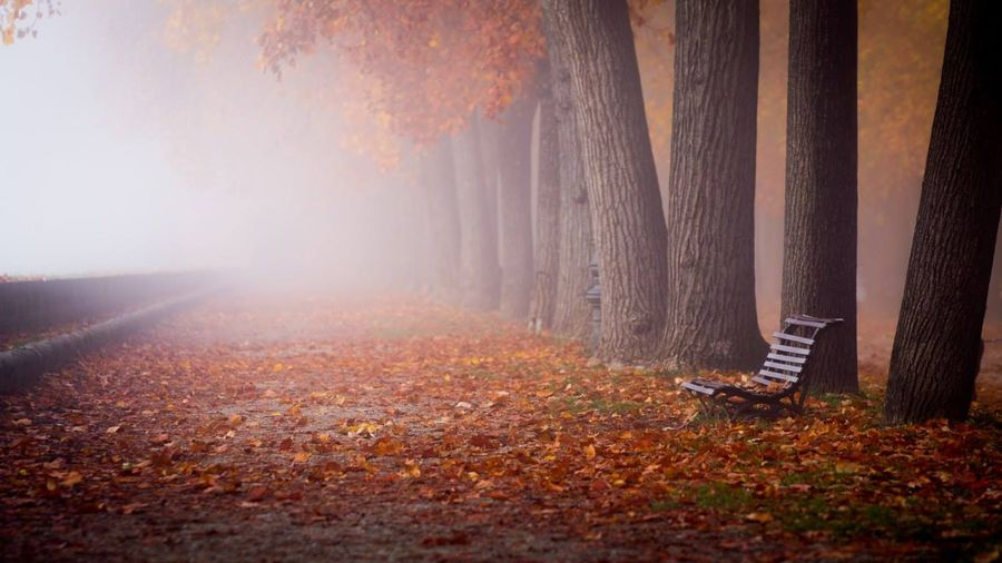 Погода на Черкащині буде хмарною та без опадів
