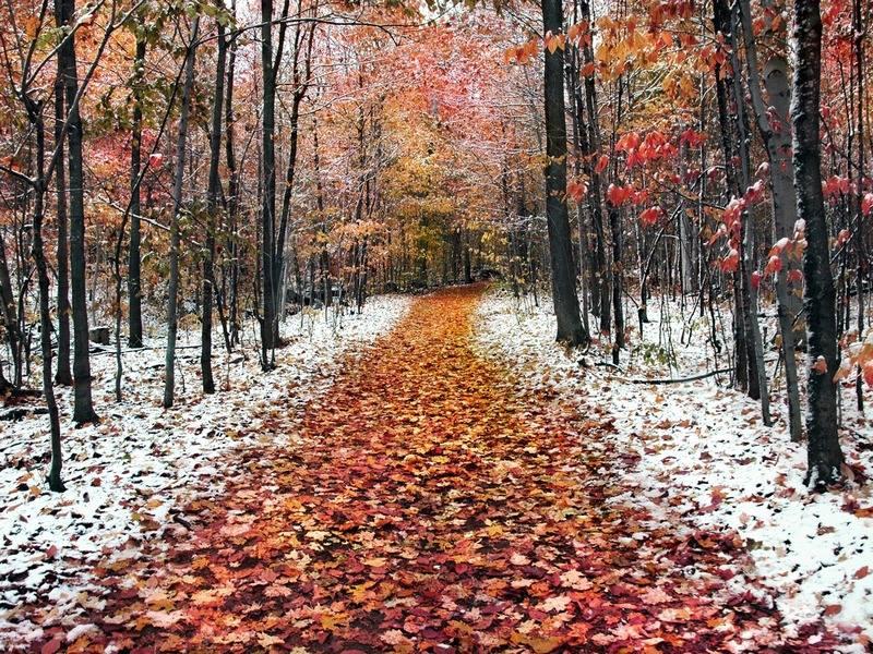 Початок зими в регіоні буде зі снігом