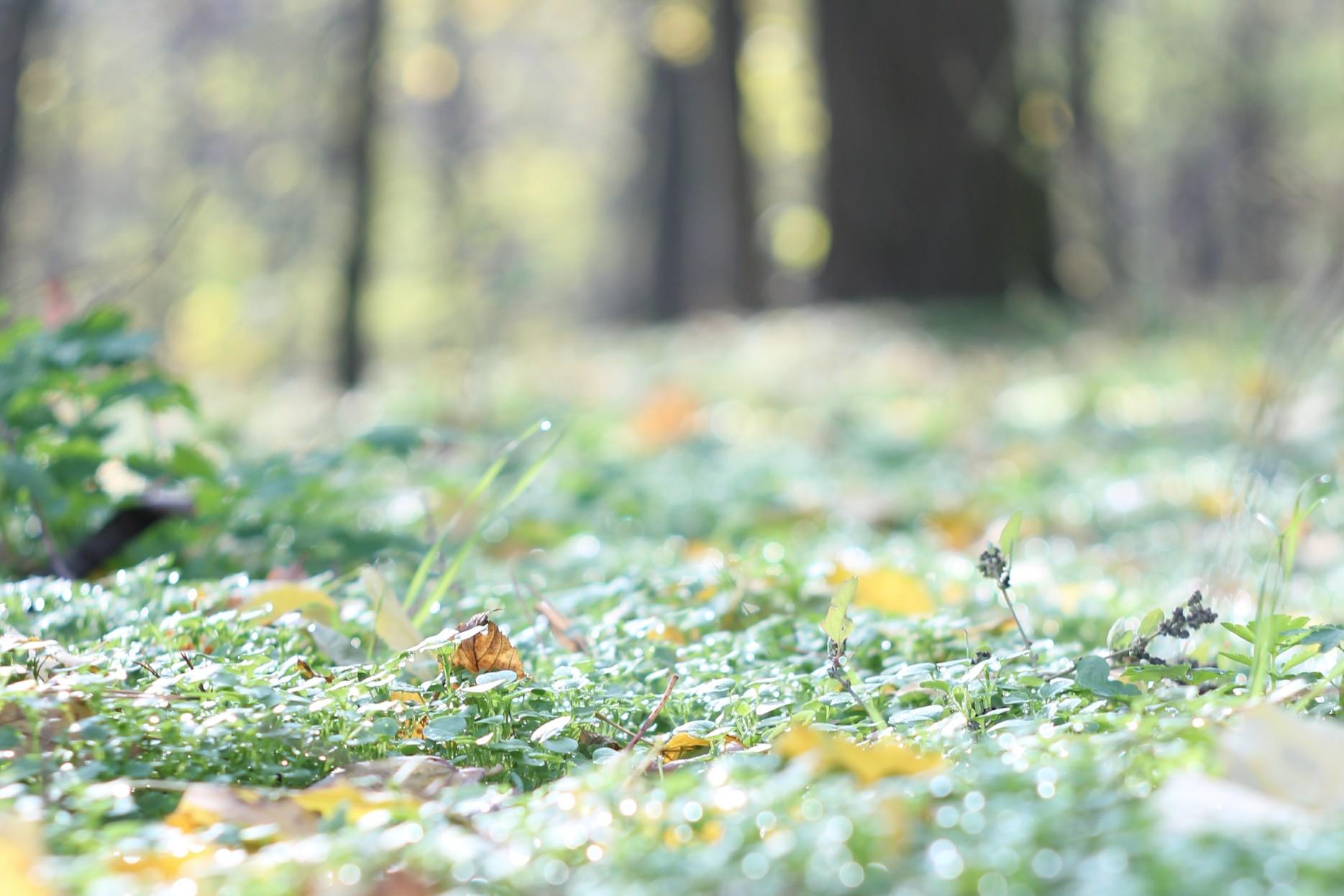 Очікується повільне зниження температури на Черкащині