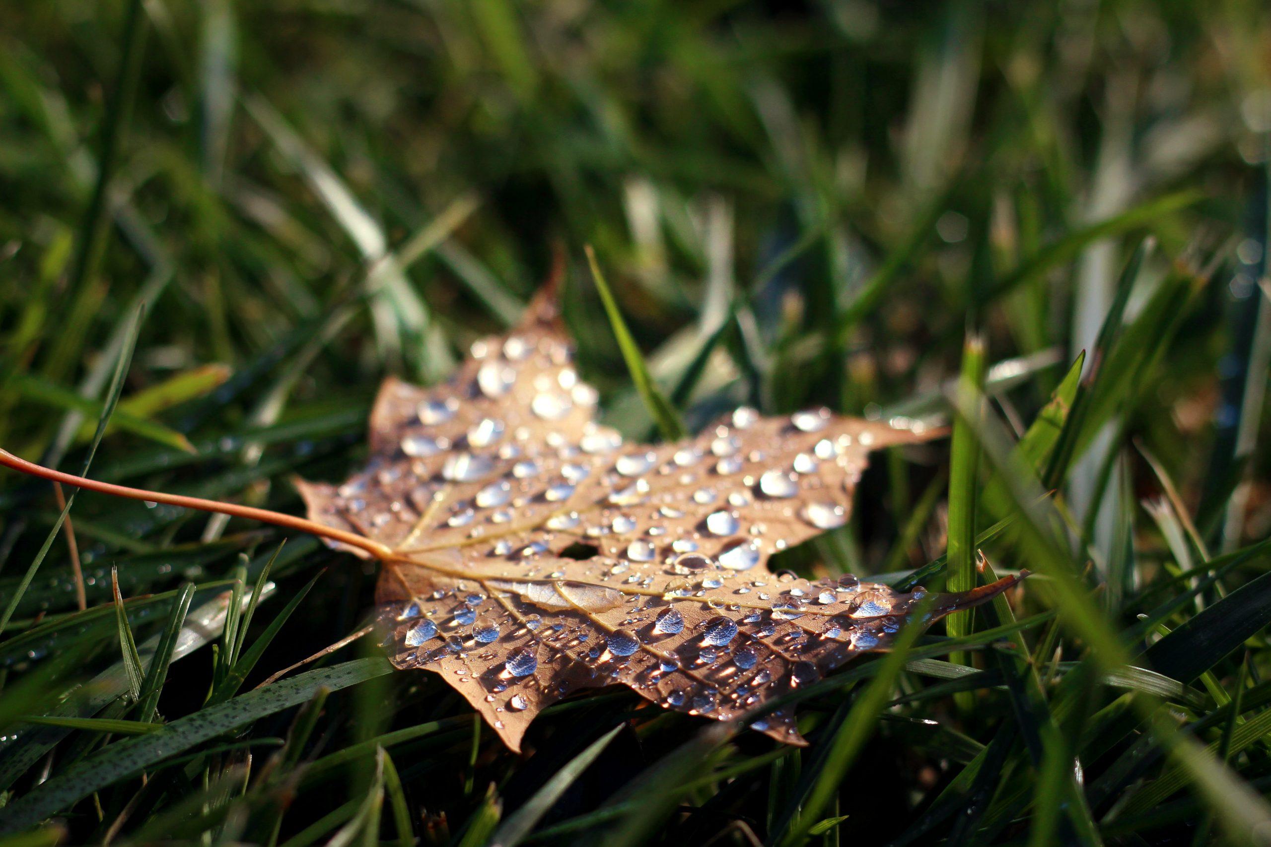 На Черкащині очікується збільшення опадів та підвищення температури