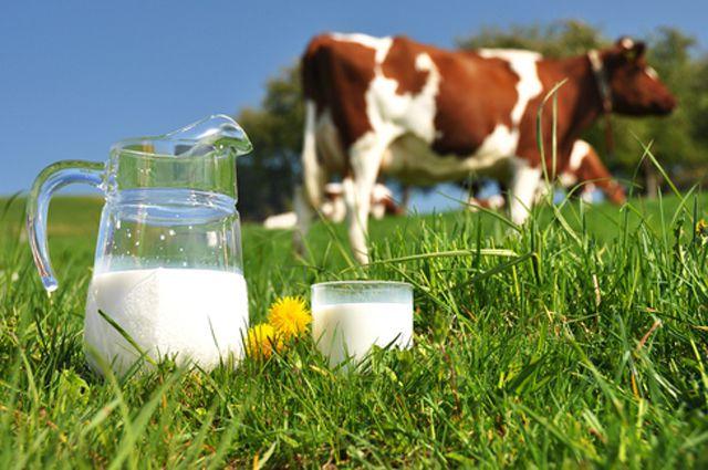 В області збільшилося виробництво молока