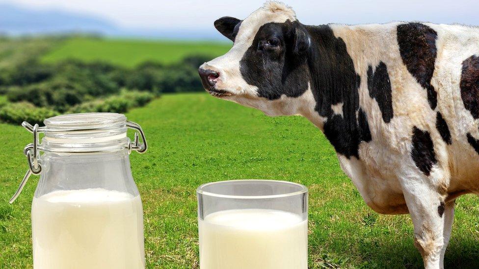 Виробництво молока в сільгосппідприємствах області збільшилося на 3,5 %