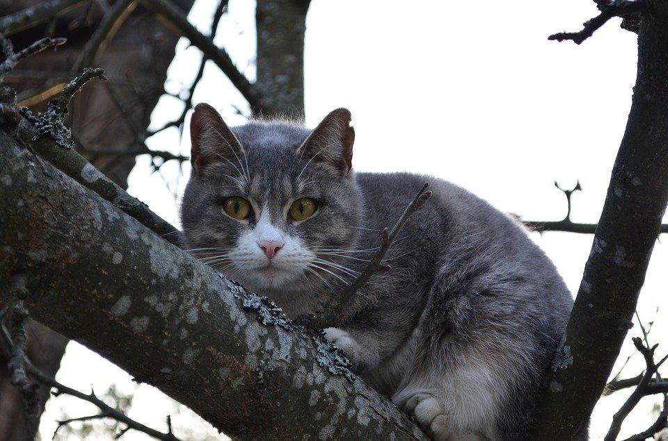 У Черкасах рятувальники зняли з дерева котика (ВІДЕО)