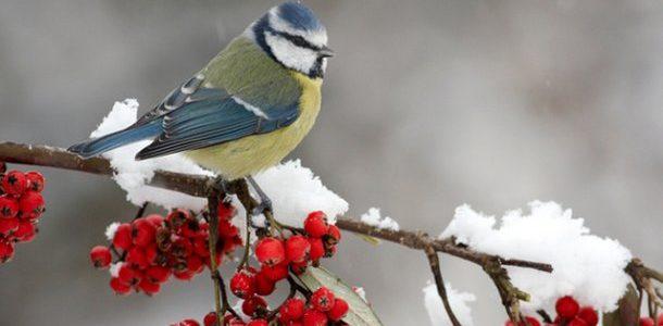 На сніг розраховувати не слід: погода на новорічні свята