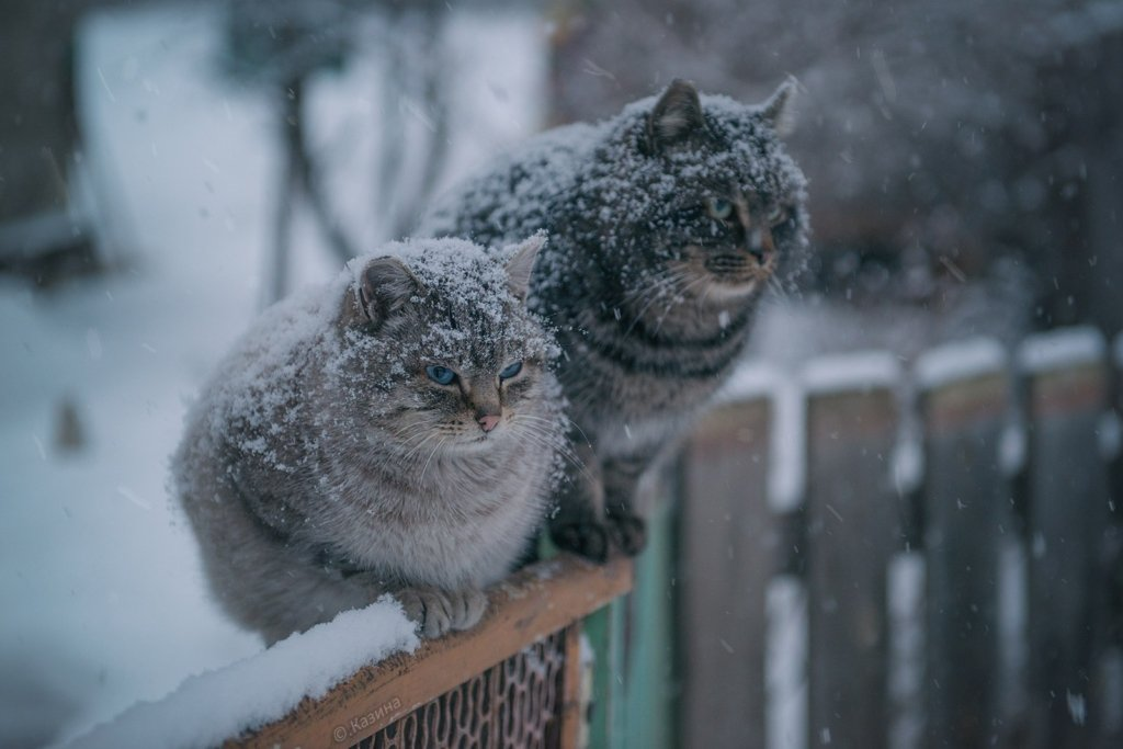 Сьогодні на Черкащині буде морозно й сніжитиме
