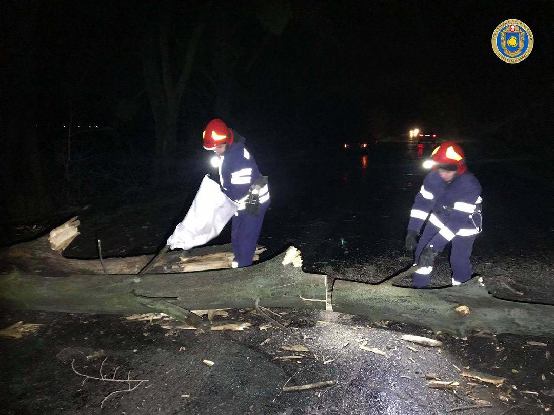 На Черкащині на проїзну частину впало дерево (ФОТО)