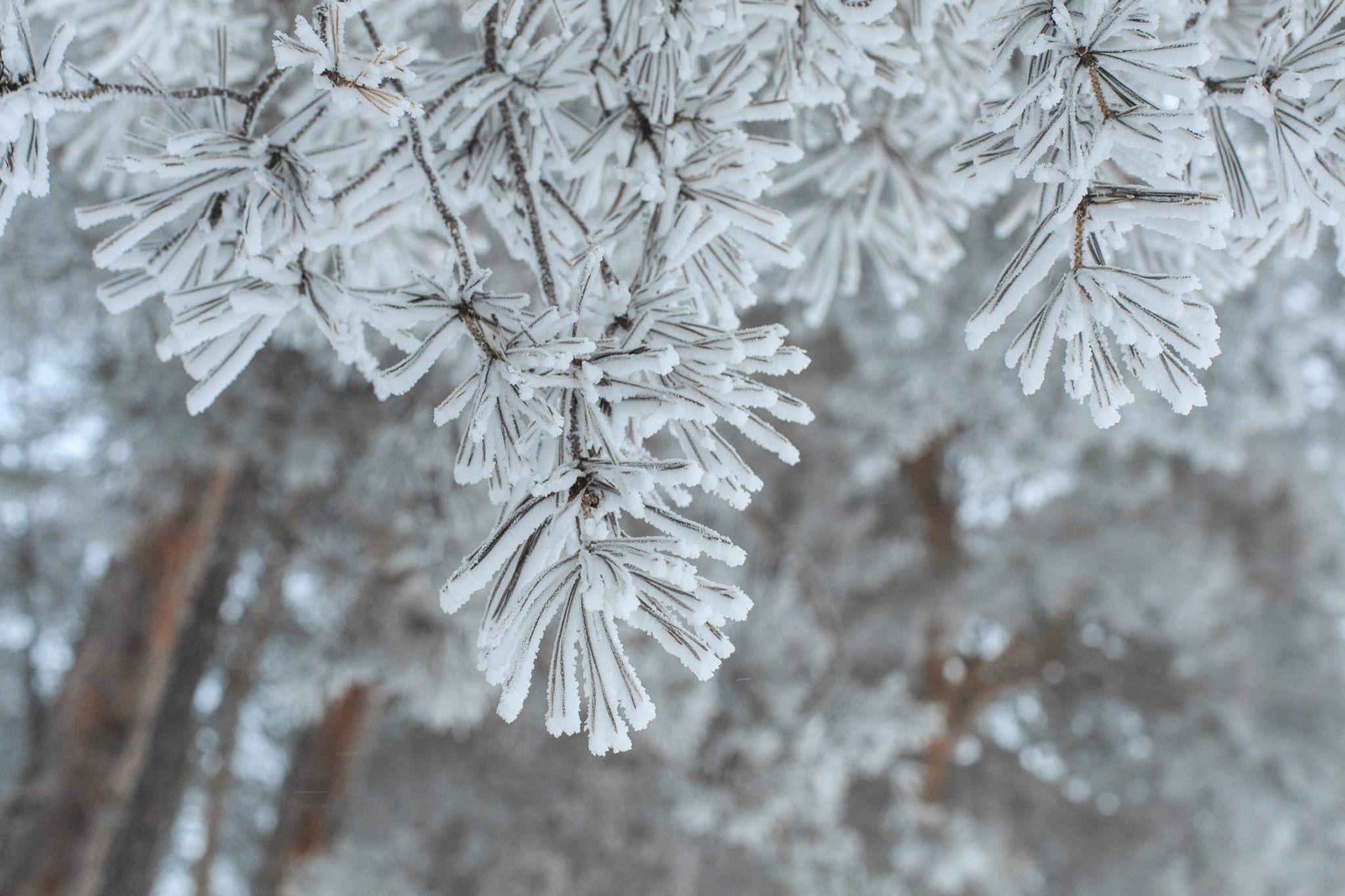 Завтра на зміну снігопадам у регіон прийдуть невеликі морози