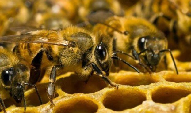 Понад 12 млн грн державної дотації отримали бджолярі Черкащини торік