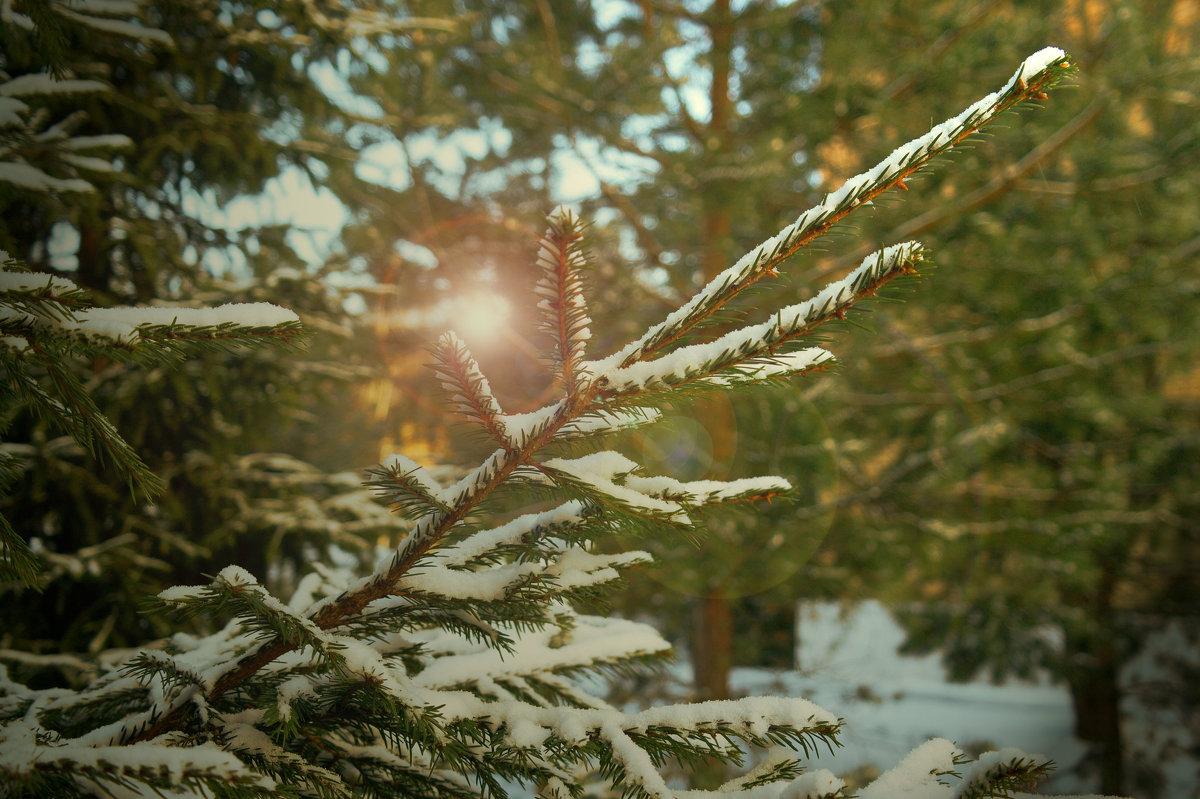 Холодна погода відступає з Черкащини