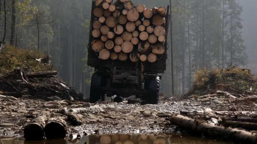 Заборону на вирубку лісосмуг встановила Новодмитрівська громада