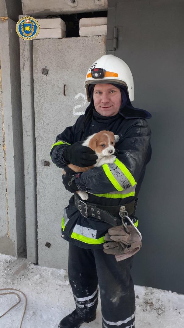 У Чигирині врятували двох маленьких цуценят
