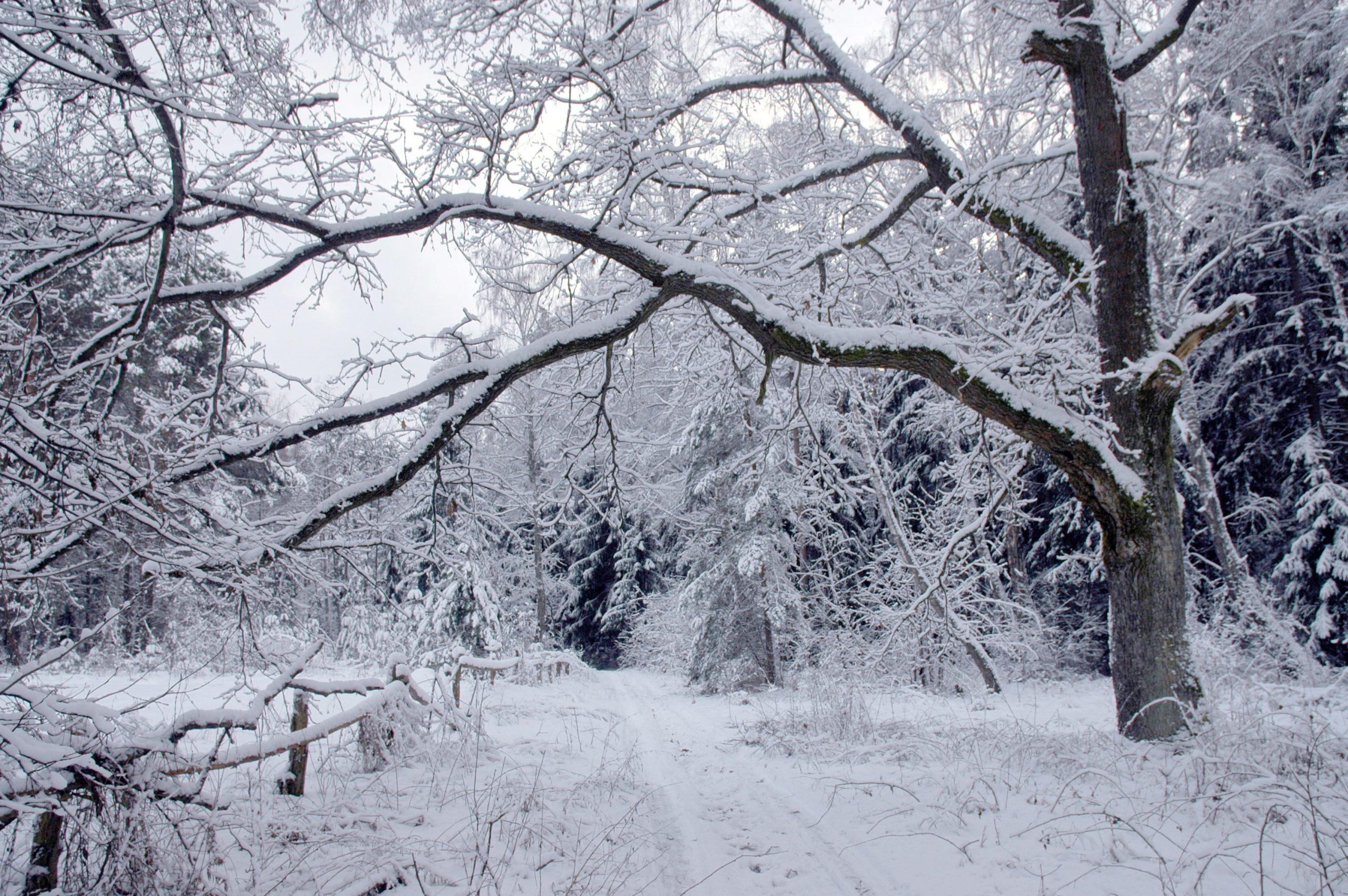 Черкащину продовжить засипати снігом