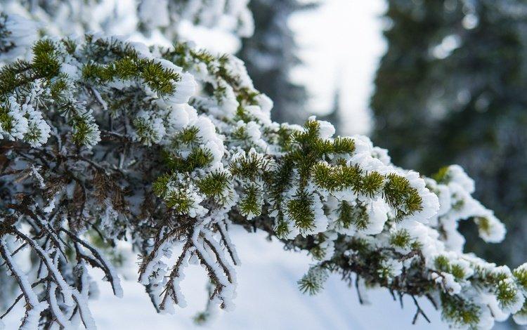 Сьогодні мороз на Черкащині ослабне