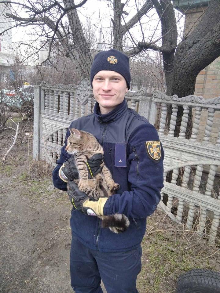 У Черкасах рятувальники зняли котика з дерева