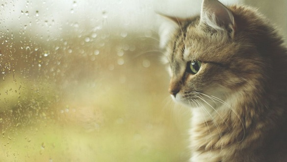 Очікується нестійка погода та дощі на Черкащині