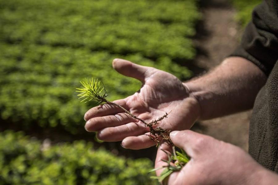 Цьогоріч чигиринські лісівники відтворять 174 гектари лісів